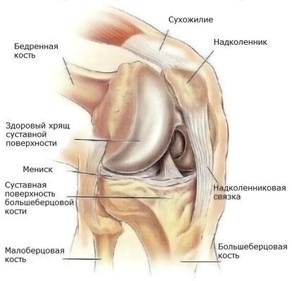 Строение коленного сустава в норме.
